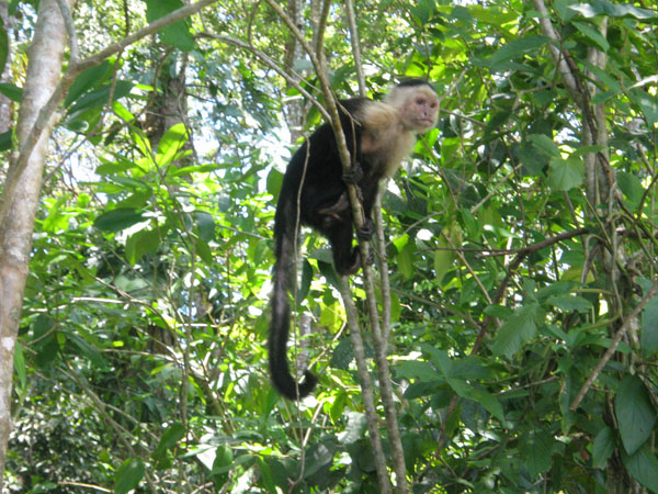 costa-rica-day-tours-puerto-viejo