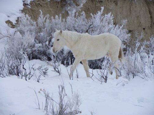 icelandic_horse_vii_by_vercingetorix09-d3bu960