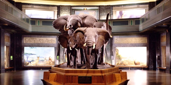 akeley-hall-of-african-mammals_dynamic_lead_slide