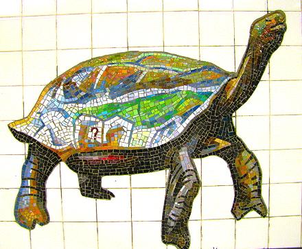 galapgos-tortoise